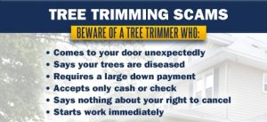 Tree-Trimming-Scams